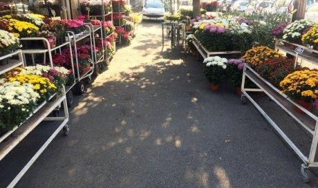Arrivage local dans votre magasin le coin fleuri à Avignon